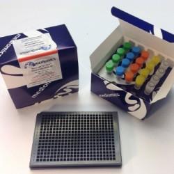 mouse IgM IMTR-1009-384