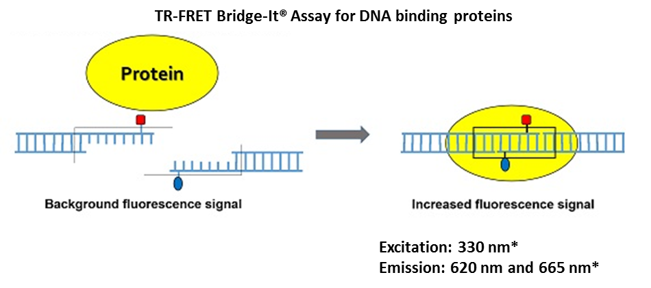 TR-FRET Bridge-It-assay-for-DNA-binding-proteins